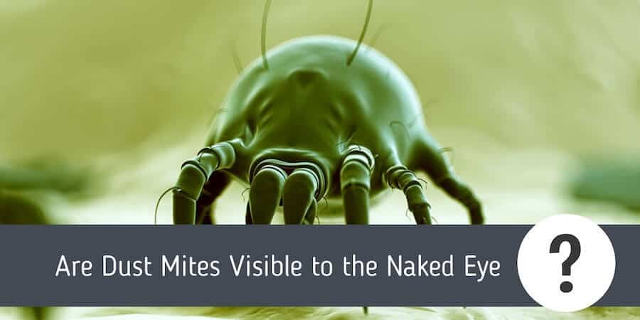 Are Dust Mites Visible to the Naked Eye?