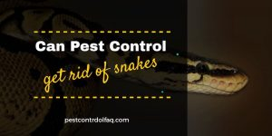 Can Pest Control Get Rid Of Snakes?