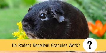 Do Rodent Repellent Granules Work?