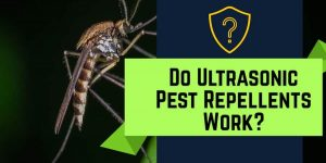 Do Ultrasonic Pest Repellents Work?
