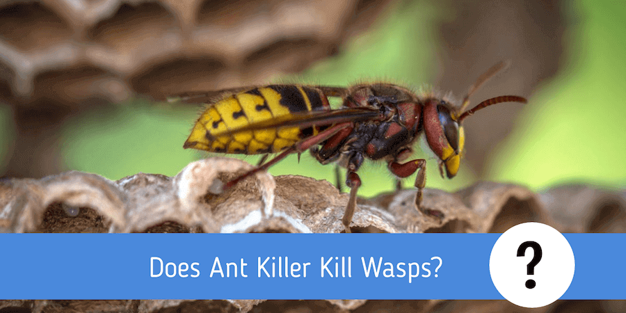 Does Ant Killer Kill Wasps? - Insect Removal Methods