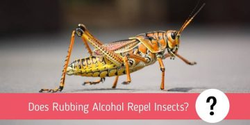 Does Rubbing Alcohol Repel Insects?