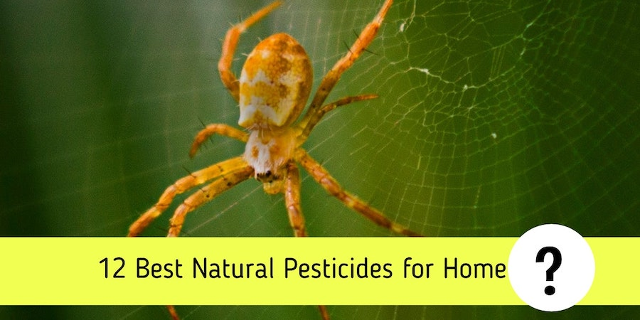 12 Best Natural Pesticides for Home - A