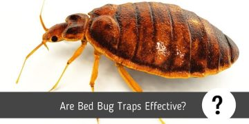Are Bed Bug Traps Effective?
