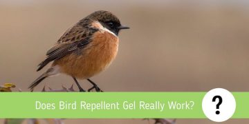 Does Bird Repellent Gel Really Work? Complete review