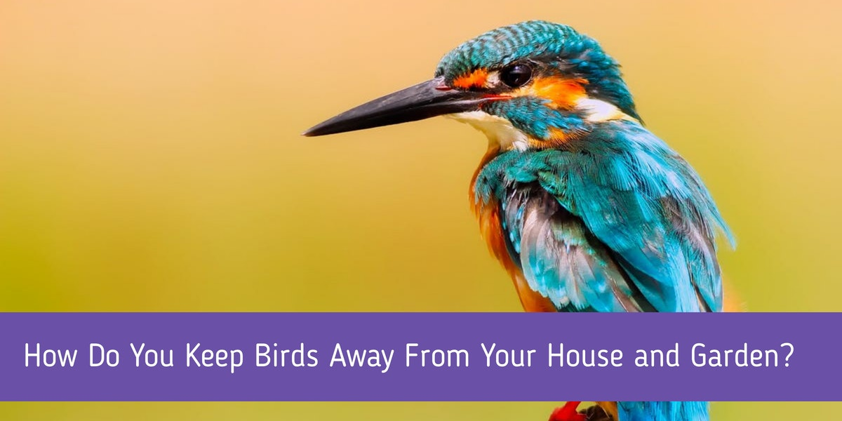 How Do You Keep Birds Away From Your House And Garden
