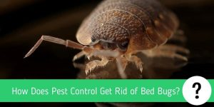 How Does Pest Control Get Rid of Bed Bugs?
