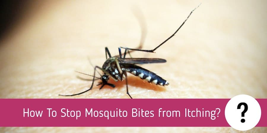 How To Stop Mosquito Bites from Itching