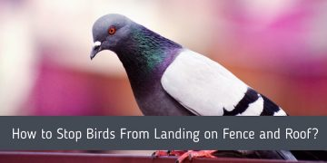How to Stop Birds From Landing on Fence and Roof?