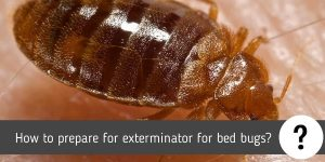 How to prepare for exterminator for bed bugs?