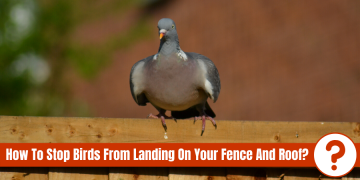 "pigeon on fence with text ""how to stop birds from landing on your fence and roof?"""