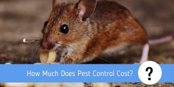 How Much Does Pest Control Cost? 2019 Full Overview