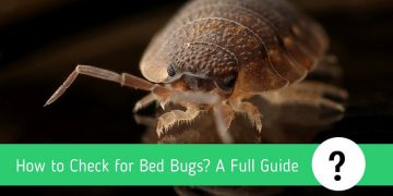 How to Check for Bed Bugs: A Complete Guide
