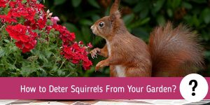 How to Deter Squirrels From Your Garden?