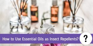 How to Use Essential Oils as Insect Repellents?