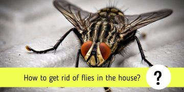 How to get rid of flies in the house: 10 simple steps
