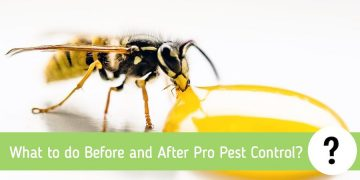 What to do Before and After Pro Pest Control?