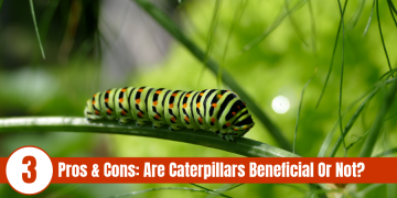 caterpillar on stem with words displayed: 3 Pros & Cons are caterpillars beneficial