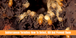 subterranean termites - crawling out of hole with a text overlay: Subterranean termites how to detect kill and prevent them