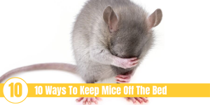 "mouse covering face with text ""10 Ways To Keep Mice Off The Bed"""