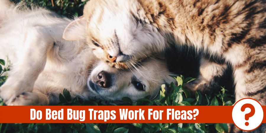 "cat rubbing head against dog's head with text ""Do bed bug traps work for fleas?"""
