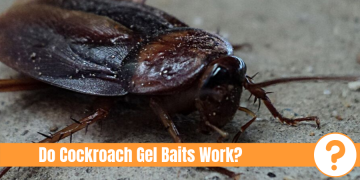 "Cockroach on concrete with text ""Do cockroach gel Baits Work?"