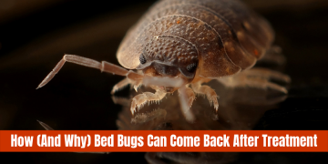 how-(and-why)-bed-bugs-can-come-back-after-treatment-featured-img