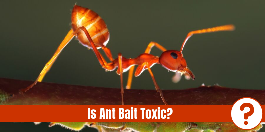 "ant on leaf with text - ""is ant bait toxic?"""