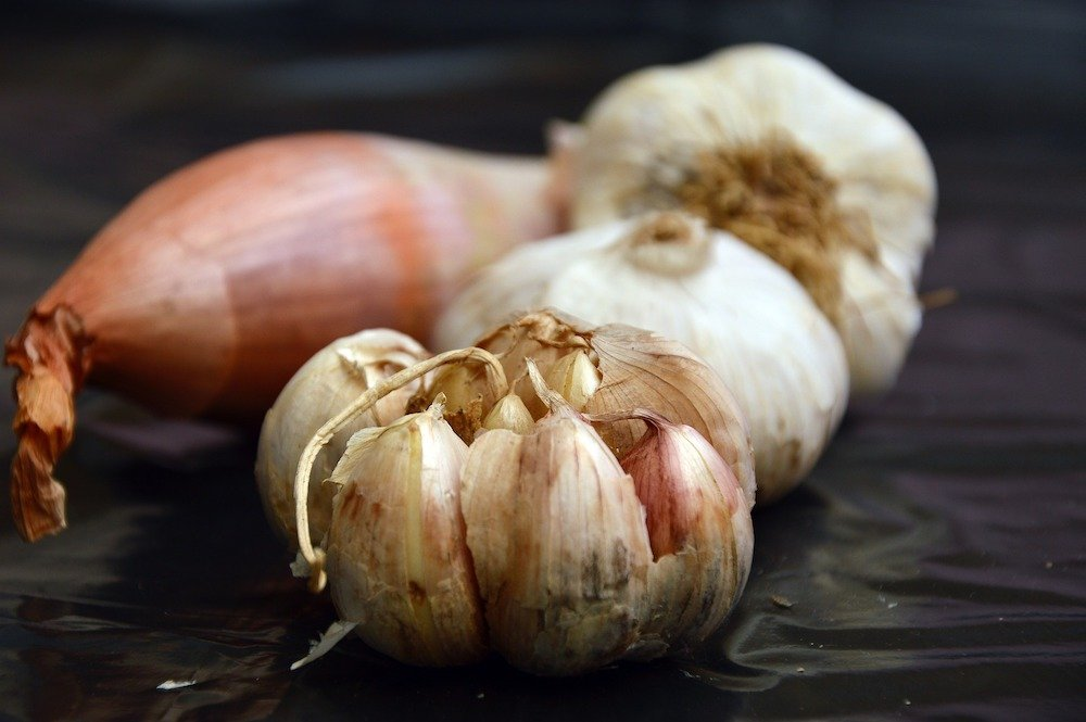 image of garlic and onion side by side