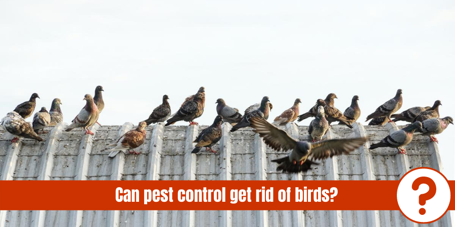 birds on roof with text: can pest control get rid of birds
