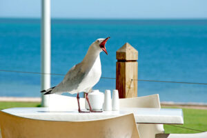 White and grey gull on a table by the ocean