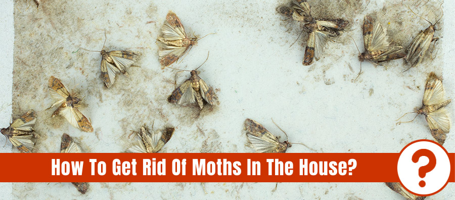 Group of moths exterminated on a white surface