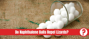 Naphthalene balls in glass with the text: do naphthalene balls repel lizards?