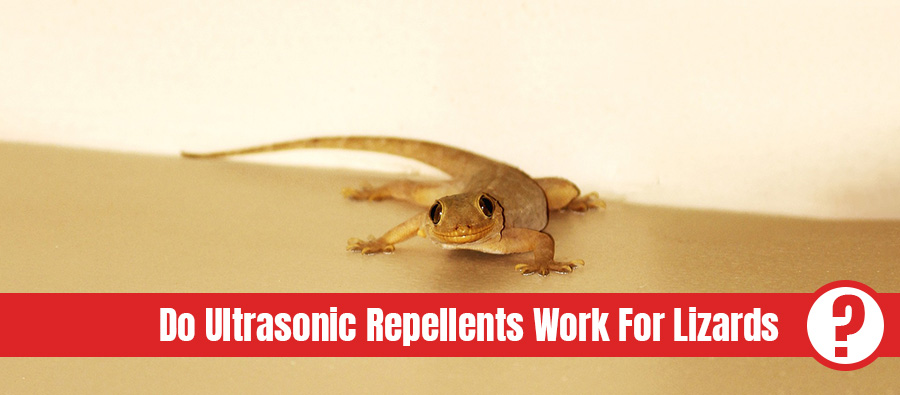 Brown lizard on surface looking into camera with the text: Do ultrasonic repellents work for lizards?
