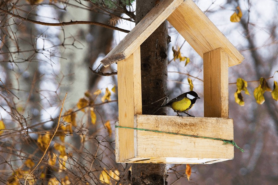Black and yellow bird on brown wooden bird house