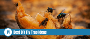 Flies are eating fruit on the ground with text: Best DIY fly trap ideas