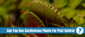 Carnivorous insects eating plant with text: Can you use carnivorous plants for pest control