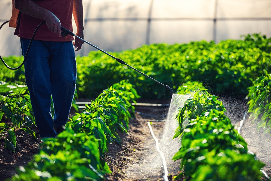 Farmer spraying green plants in the garden with pesticides